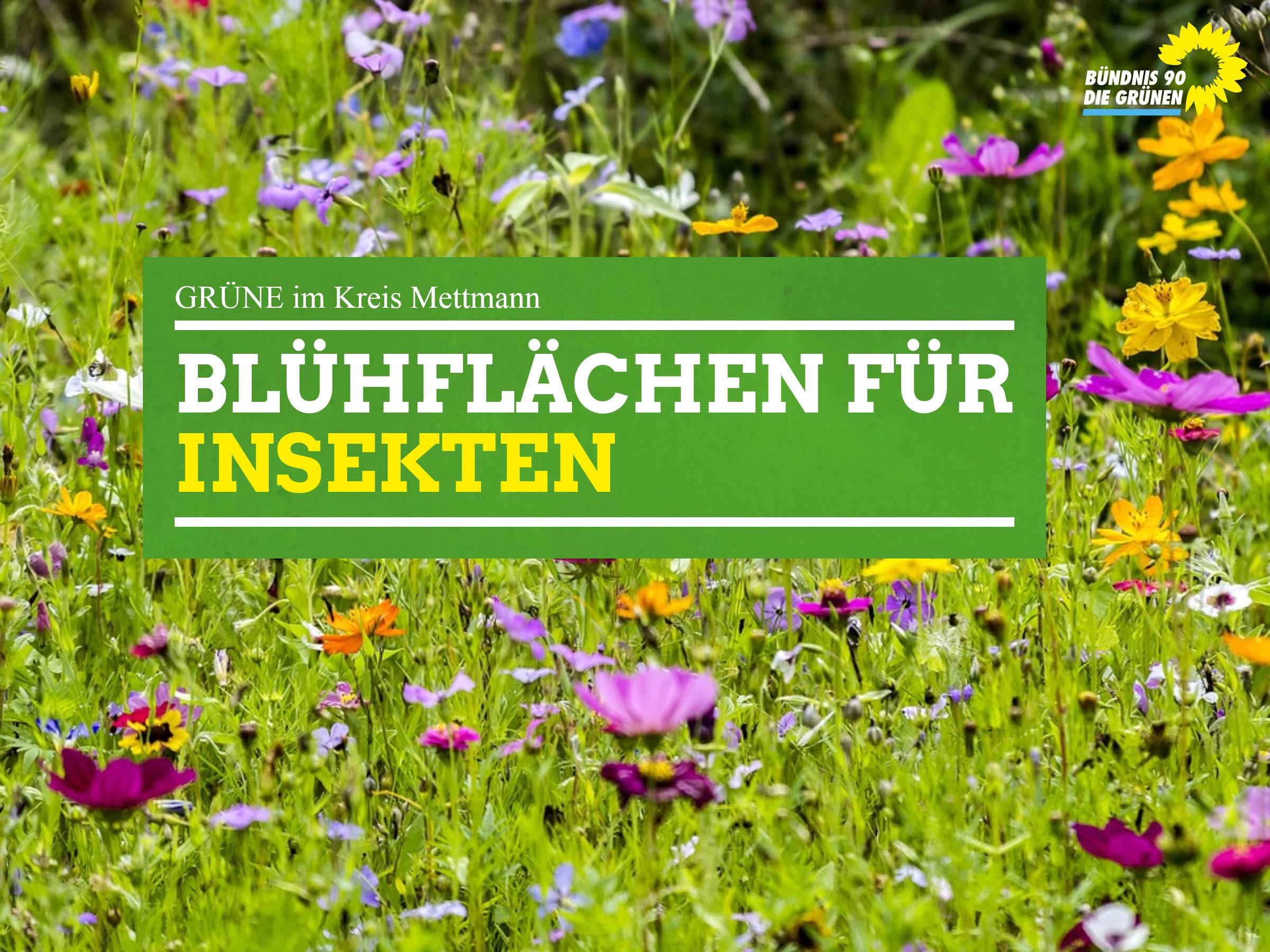 GRÜNE im Kreistag: Mehr Blühflächen für Insekten