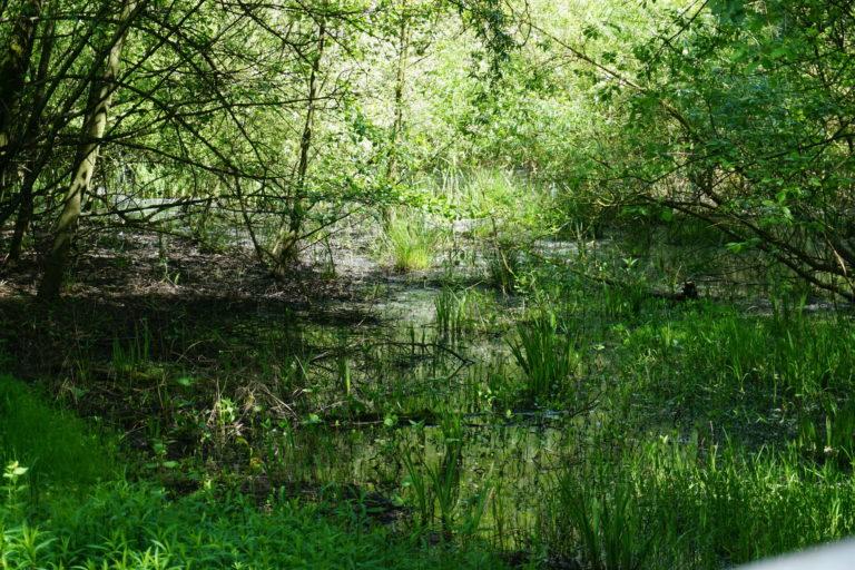 Further Moor vor Schadstoffen schützen