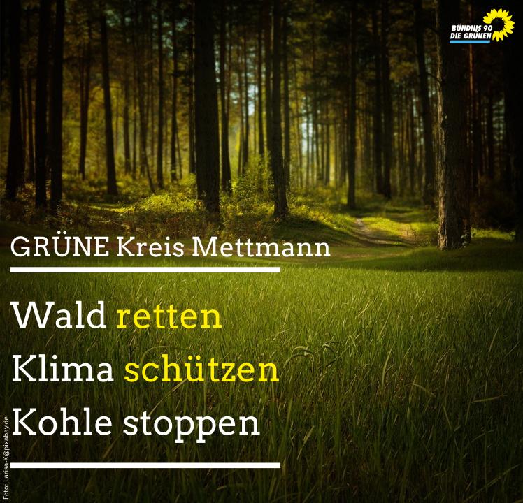 GRÜNE im Kreistag: RWE soll für Rodungsmoratorium im Hambacher Wald sorgen